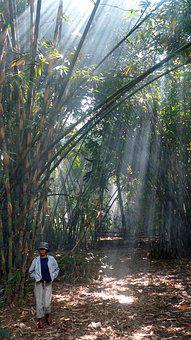 Indonesia, Java, Bali, Bamboo, Sun, Ray Of Sunshine