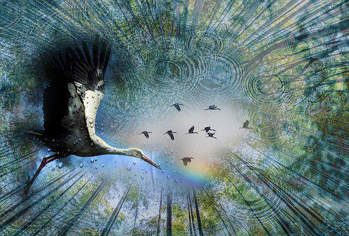 Rain, Bird, Rainbow, Nature, Sky, Trees, Living Nature
