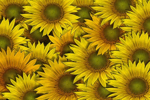 Sunflower, Flower, Flowers, Background, Drawing