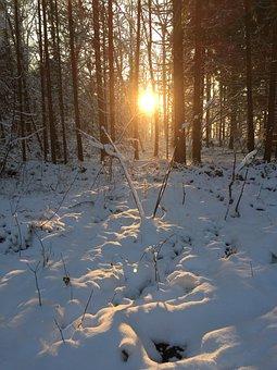 Winter, Forest, Sun, Wintry, Trees, Snow Landscape