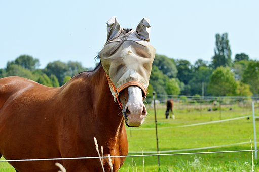 Horse, Flying Hat, Fly Cap, Protection, Fly