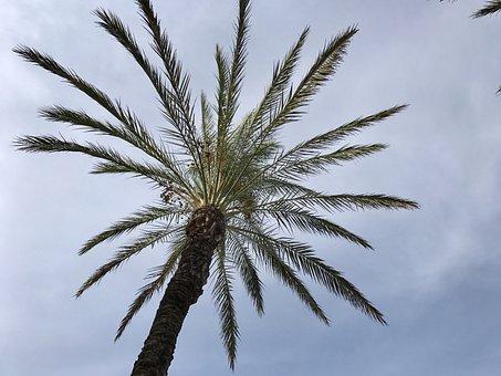 Ibiza, Spain, Balearic Islands, Holiday, Sea, Island