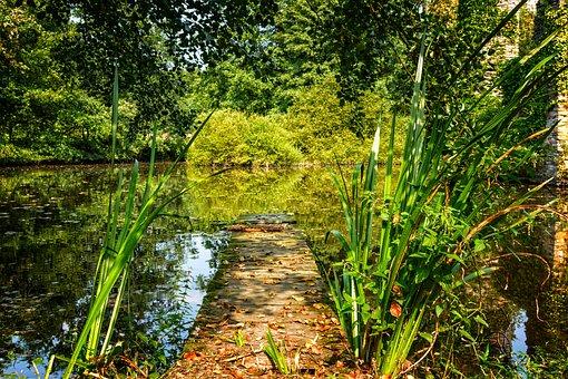 Nature, Lake, Pond, Web, Jetty, Water, Summer