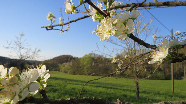 Apple Blossom, Spring, Nature, Blossom, Bloom