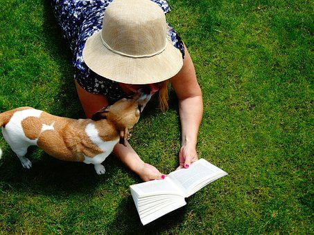 Book, Read, Jack Russell, Hat, Book Mark, Relax