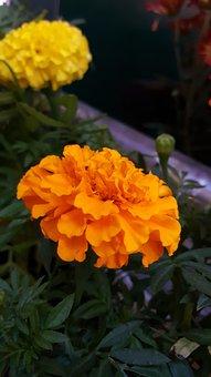 Flower, Orange, Orange Flower, Flower Isolated