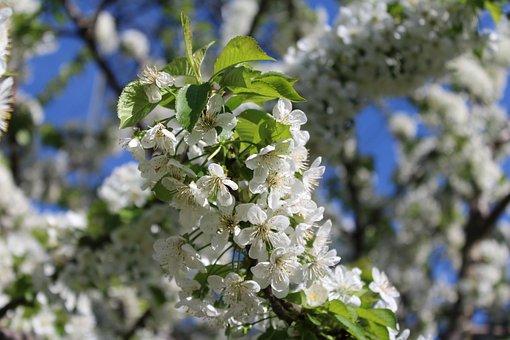 Spring, Flower, Seasons, Spring Flowers, Flowers