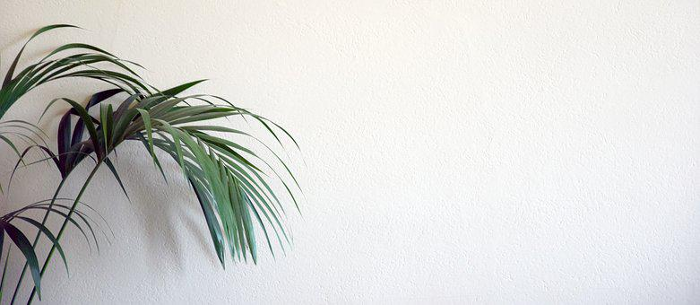 Background, Website, Plant, Wall, Nature, Pattern, Plot
