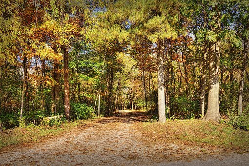 Scenery, Autumn, Trees, Artistic, Art Print
