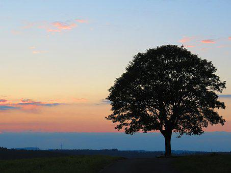 Sunset, Tree Of Life, Afterglow, Lonely, Nature