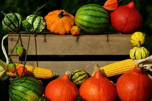 Pumpkin, Thanksgiving, Harvest, Autumn, Orange, Gourd