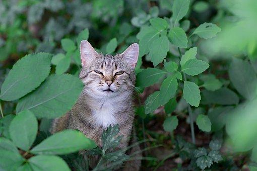 Cat, Animal, Animals, Domestic Animal, Wildcat