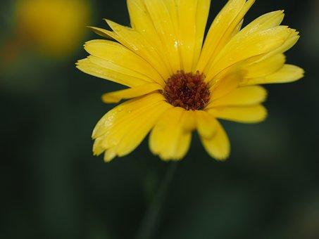 Flower, Yellow, Summer, Yellow Flower, Blossom, Bloom