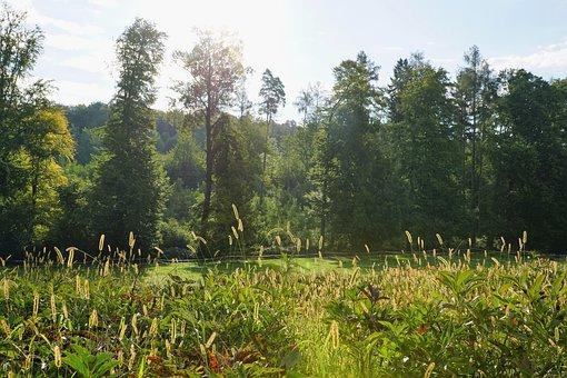 Meadow, Zollikon, Switzerland, Alpine, Nature, Swiss