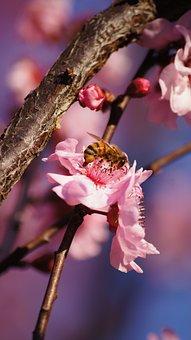 Bee, Pink Flower, Bokeh, Macro
