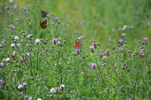 Prairie, Insects, Butterflies, Bees
