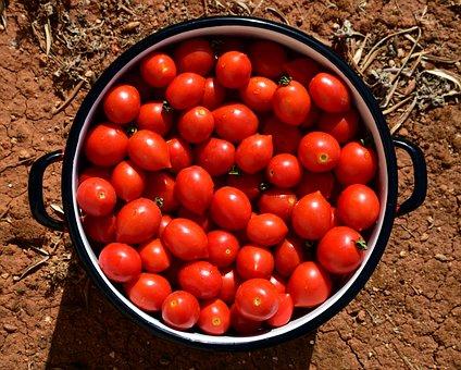 Tomatoes, Pot, Cooking Pot, Tomato Sauce, Cook, Prepare