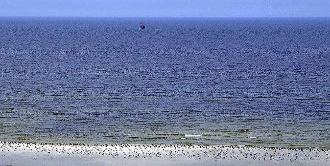 Sea, Birds, The Seagulls, Cormorants, Herd