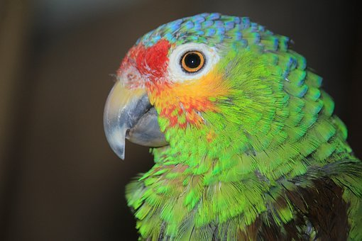 Parrot, Ara, Birds, Colorful, Plumage, Color, Eyes