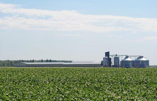 Field, Potatoes, The Elevator, Sky, Horizon, Clouds
