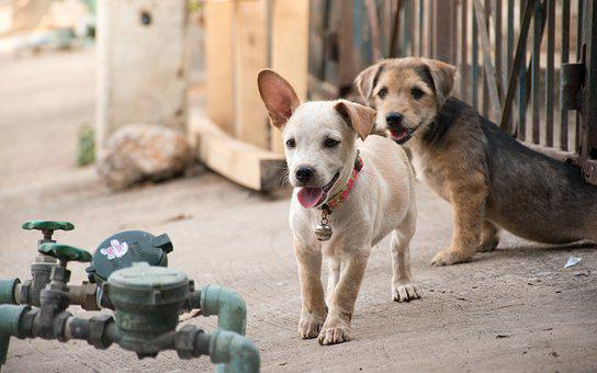 Puppy, Dog, Bright, The World, Animals, Relax