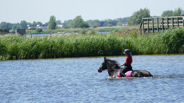 Horse, Refreshment, Outdoors, Water, Cooling Down