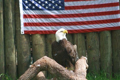 Eagle, America, Beautiful, Bird, Symbol, Usa, Bald