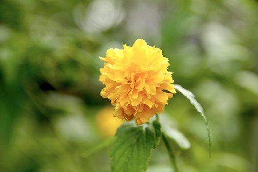 Flowers, Yellow, Greenness, Bokeh, Blur, Yellow Flowers