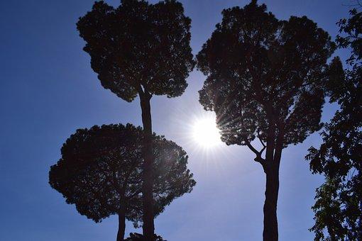 Rome, Tree, Sky, Canopy, Nature, Blue Sky
