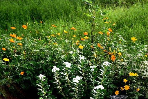 Grass, Green, Flowers, Green Grass, Nature, Lawn, Field