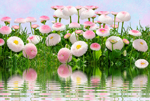 Flowers, Pink, Light Blue, Pink Flower, Nature