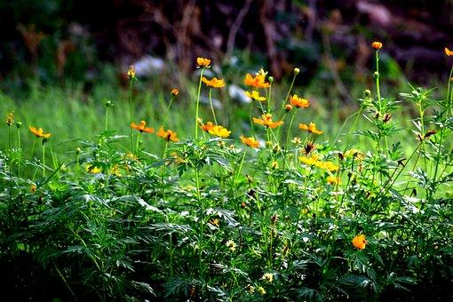 Grass, Green, Nature, Flowers, Green Grass, Meadow