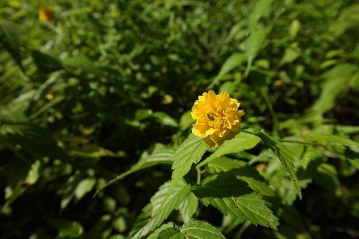 Greenness, Yellow, Yellow Flower, Flowers, Nature, Bush