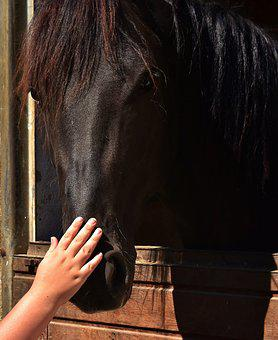 Horse Love, Child's Hand, Stroke, Love For Animals