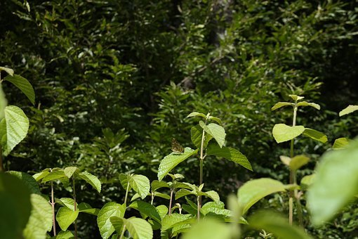 Butterfly, Greenness, Bush, Highlight, Nature