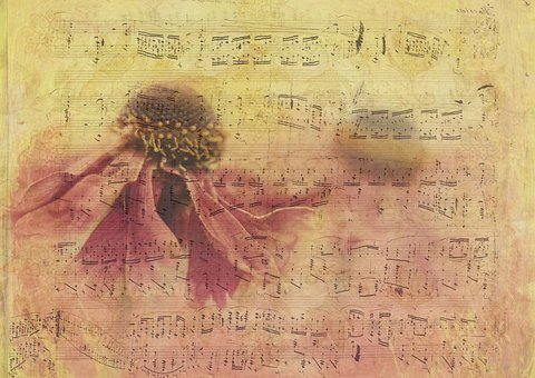 Texture, Background, Paper, Blossom, Bloom, Flower