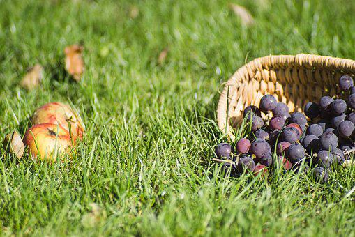 Grapes, Dark, Fresh, Shopping Cart, Apples, Grass