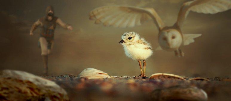 Fantasy, Animals, Chicks, Owl, Barbarian, Nature