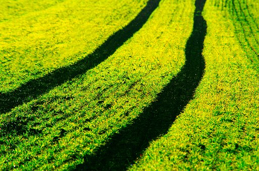Field, Arable, Tractor, Traces, Green, Juicy, Spring