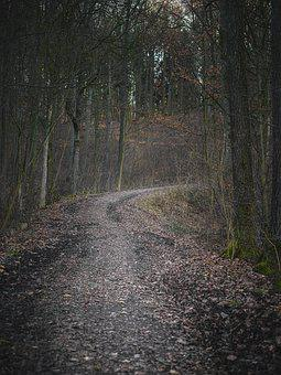 Forest, Forest Path, Away, Leisure, Trees, Nature
