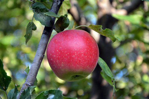 Close-up, Apple, Red, Macro, Greens, Background, Nature