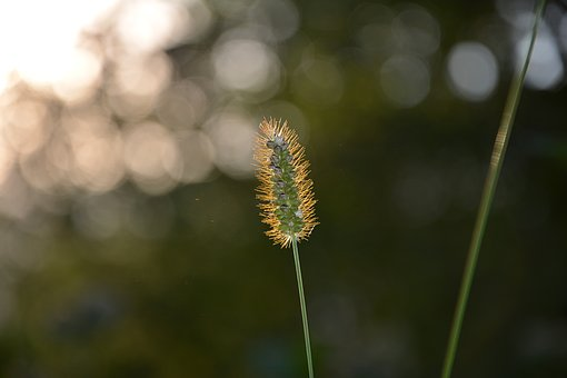 Close-up, Macro, Greens, Background, Nature