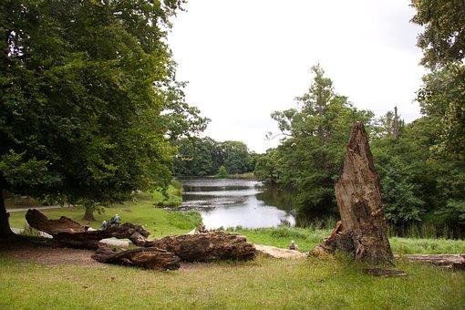 Skovlysning, Tree Trunks, Lakeshore, Residence