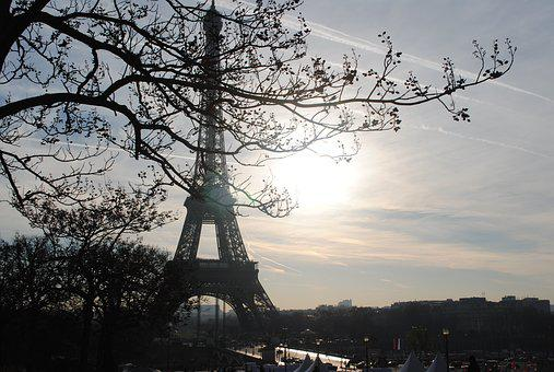 Paris, Tree, Eiffel Tower, City, Building, Landscape