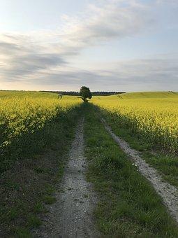 Way, Field, Rapeseed, Landscape, Grass, Tree, View