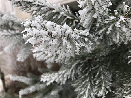 Frost, Winter, Snow, Closeup, Needles, Christmas Tree