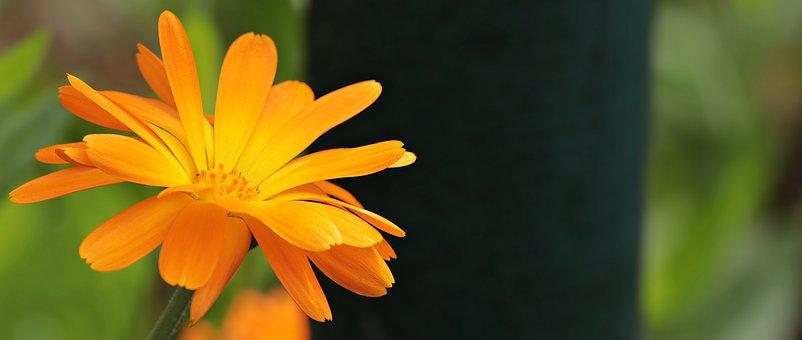 Pointed Flower, Orange Flower, Nature, Orange, Blossom