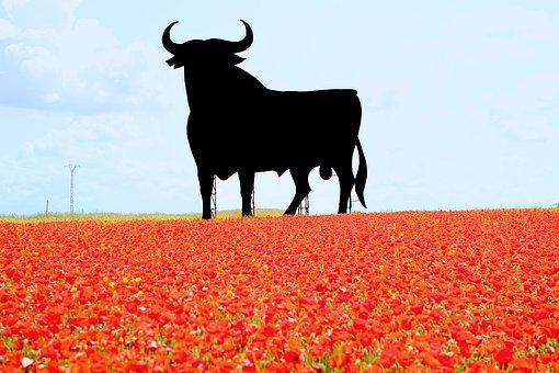 Spain, Bull, Poppies, Billboard, Osborne, Landmark