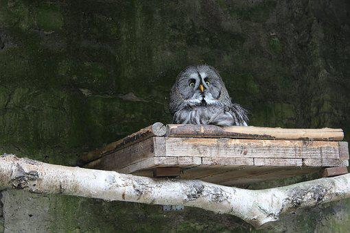 Owl, Hiding Place, Watch, Wildlife Photography