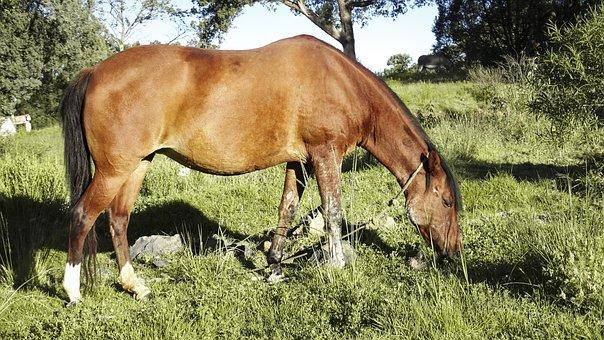 Horse, Nice, Nature